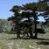 Agriturismo I Gelsi - Francavilla Marittima - Agriturismo Parco Nazionale Pollino  bed sibari estate sibari sibari