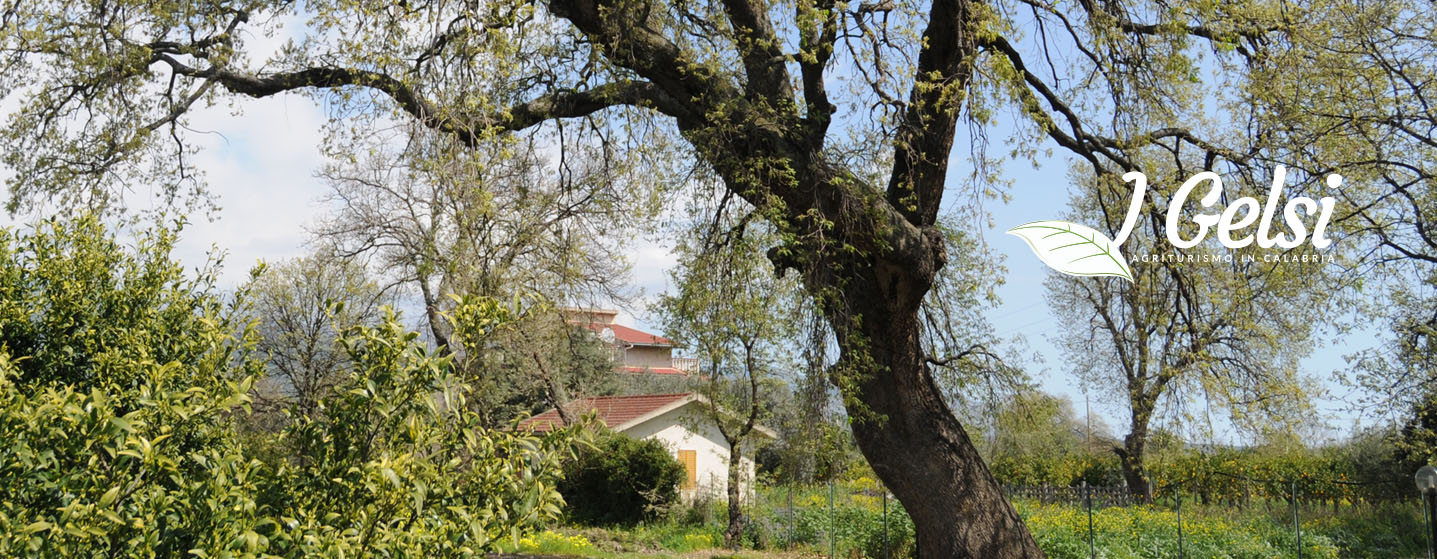 Agriturismo I Gelsi - Francavilla Marittima - Piana di Sibari   agriturismo sibari agriturismo i agriturismo